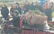 Củ khoai lang khổng lồ nặng 41 kg của nông dân Trung Quốc