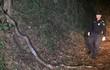 Đi tuần đêm, phát hiện trăn khổng lồ dài hơn 5m