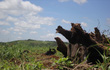 """Đắk Nông: 213 lãnh đạo huyện, xã có """"sổ đỏ"""" từ đất rừng bị lấn chiếm"""