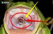 Con rắn điên cuồng thoát khỏi họng con ếch: Sự thật đằng sau bức ảnh này là gì?