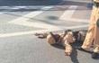 Nhắc nhở xe máy đi vào đường trên cao, CSGT bị đâm trọng thương