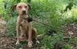 Bị trói vào cây, bỏ đói suýt chết, chú chó vẫn không quên bảo vệ thứ quý giá này