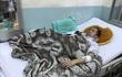 Đức trong cặp song sinh Việt - Đức tiếp tục lên bàn mổ cấp cứu