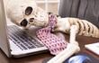 Căng thẳng hay mất động lực làm việc, nhớ 8 mẹo chăm sóc bản thân nơi công sở nhỏ mà có võ