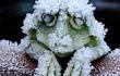 """Đây chính là loài sinh vật máu lạnh """"chết cứng"""" trong mùa đông, sống dậy vào mùa xuân"""