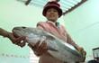 Ngư dân Quảng Nam bắt được cá nghi sủ vàng quý hiếm
