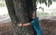 Xử lý nhiều lãnh đạo liên quan vụ cây giáng hương 'khủng' biến mất