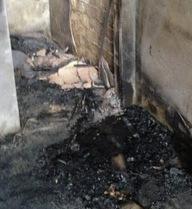 Trung Quốc: Bố đốt nhà, thiêu chết con gái 8 tuổi