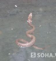 Rộ tin đồn 'rắn thần' xuất hiện ở Thanh Hóa
