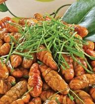 Công dụng và tác hại khi ăn nhộng tằm: bạn cần biết để tránh