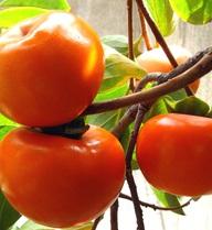 5 loại trái cây tuyệt đối không ăn khi đói bụng nếu không muốn nhập viện cấp cứu