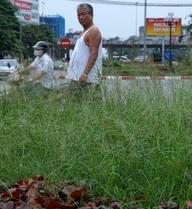 """Cỏ mọc um tùm ở Hà Nội: """"Đừng để đường phố Thủ đô biến thành rừng cỏ hoang"""""""