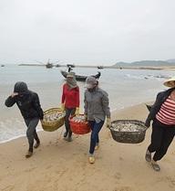 Mối nguy hiểm khi ăn cá nhiễm độc từ chất thải của Formosa