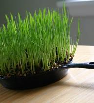 """Mẹo trồng rau siêu sạch nơi """"đất chật người đông"""""""