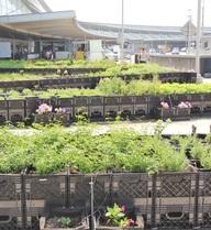 Trang trại đầu tiên trên thế giới trồng rau sạch ngay trong sân bay!