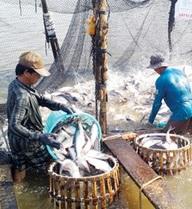 'Động trời' ở Tổng cục Thủy sản: Kiểm định khống hơn 800 sản phẩm