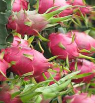 Trái cây đua nhau giảm giá chỉ còn vài nghìn đồng/kg