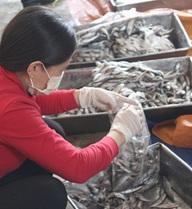 Sẽ tiêu hủy 70 tấn cá tồn kho sau sự cố môi trường biển