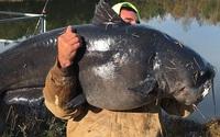 """Bất ngờ bắt được """"thủy quái"""" nặng hơn 50kg, ngư dân ngay lập tức có hành động rất… lạ lùng"""