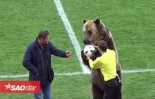Đội bóng Nga gây sốc khi dùng gấu khổng lồ làm 'người khai cuộc trận đấu'