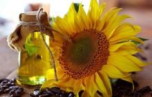 3 lý do dầu hướng dương là loại dầu ăn cần có trong mọi gia đình