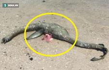 Sinh vật bí ẩn giống hệt quái vật hồ Loch Ness dạt vào bờ biển Mỹ