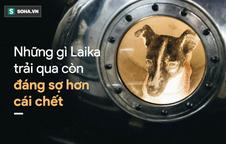 """Nước mắt cô độc của Laika: Câu chuyện buồn của chú chó """"phi hành gia"""" Liên Xô"""