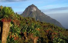 """Ghé thăm """"khu vườn"""" tuyệt diệu và nguy hiểm bậc nhất châu Phi: Virunga"""