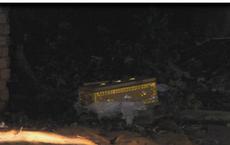 Thi thể thai nhi đang phân hủy trong quan tài bỏ ở bãi rác
