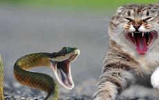 """Màn """"đại chiến"""" giữa chó, mèo và con rắn độc"""