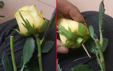 """Bông hồng lừa đảo trong ngày 20/10 khiến nhiều người """"chẳng dám tin ai"""""""