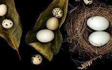 Trứng cút, trứng gà, trứng vịt - trứng nào bổ hơn: Hãy nghe câu trả lời của chuyên gia