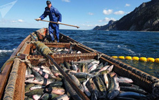Cuộc sống trên quần đảo Nam Kuril tranh chấp giữa Nga và Nhật Bản