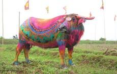 10 con trâu được họa sĩ vẽ sặc sỡ tham gia lễ hội Tịch điền