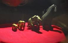 Ngắm bảo vật voi bằng vàng của vua Hàm Nghi ban tặng