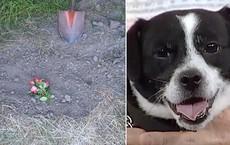 Đau đớn chôn chú chó cưng bị xe đụng chết, 14 tiếng sau cả nhà không tin nổi điều đang đợi họ trước cửa