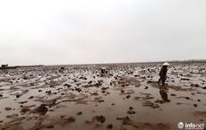 Loại cá kỳ dị nhất hành tinh được nhiều ngư dân săn bắt ở biển Thanh Hóa