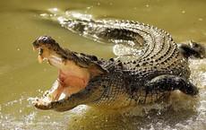 Người dân xử nghi phạm hiếp dâm bằng 'luật rừng': Thả vào chuồng cá sấu