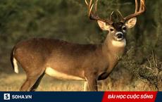 Lỡ tay bắn chết con linh dương, 1 thứ được phát hiện sau đó khiến thợ săn lập tức bỏ nghề