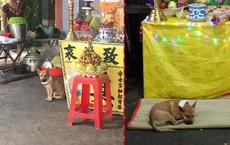 Hình ảnh xúc động: Chủ vừa qua đời, chú chó nhỏ buồn bã bỏ cả ăn để túc trực bên linh cữu không chịu rời