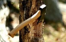 Đốn hạ cây cổ thụ lấy gỗ đóng thuyền và hồi kết khiến người đàn ông rơi nước mắt
