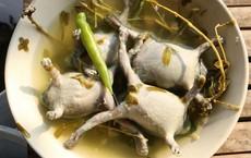 Ếch òn nguyên con - món ăn khiến nhiều người khiếp vía khi vừa nhìn thấy này lại là đặc sản ở Việt Nam và cả Thái Lan