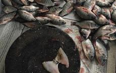 Nàng Tấm phiên bản 2018: Đang ốm lả người vẫn bị mẹ chồng bắt lọc mấy chục cân cá rô phi mới được nghỉ