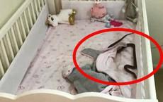 """Đặt con gái 4 tháng tuổi nằm ngủ trong cũi, 1 tiếng sau bà mẹ giật mình phát hiện cảnh tượng """"rợn tóc gáy"""", vội vàng bế con tháo chạy"""
