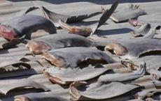 Kiểm tra gấp vụ 'vây cá mập trên mái nhà sứ quán VN'