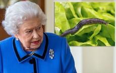 """Đang ăn thì phát hiện ốc sên chết trong món salad, phản ứng của Nữ hoàng khiến đầu bếp hoàng gia """"tái xanh mặt"""""""