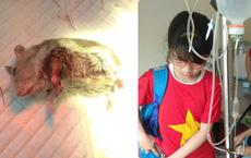 2 cô bé lớp 7 ôm chú chuột bị thương tới phòng khám và hành động dễ thương của bác sĩ thú y