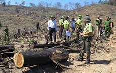 Công an vào cuộc điều tra vụ Phó Chủ tịch xã tham gia chặt phá rừng