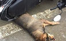 Nữ lao công bị chó của nam sinh trường nghề lao đến cắn nguy kịch