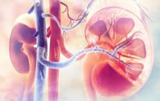 3 dấu hiệu cảnh báo bệnh thận viêm, đừng để tiến triển thành suy thận bạn mới hoảng sợ